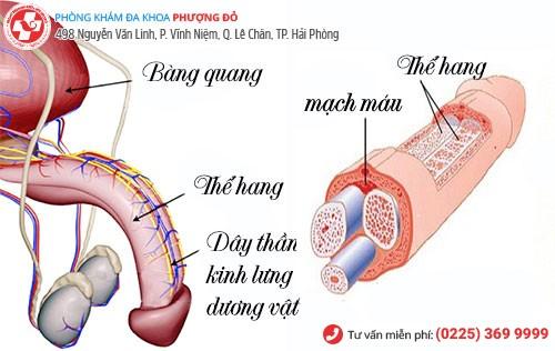 cấu tạo dây thần kinh duong