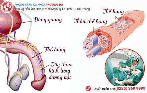 Chặn dây thần kinh lưng dương vật - Phương pháp chữa xuất tinh sớm hiệu quả hiện nay
