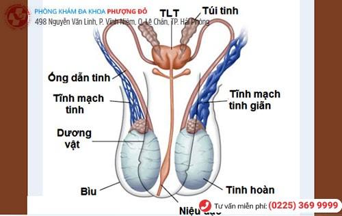 Viêm túi tinh khiến tinh trùng có mùi hôi tanh